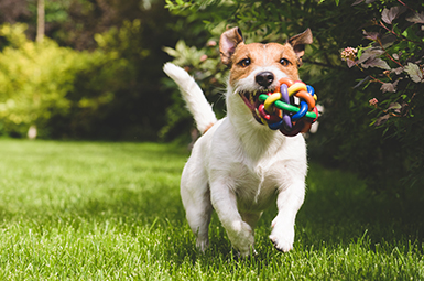 Puppy running with a Toy - Things Visual Filmworks Love - Photography Services Oak Lawn